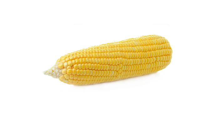 Кукурудза. ТМ «Світовоч»